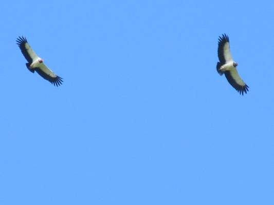 International Migratory Bird Day a Big Success